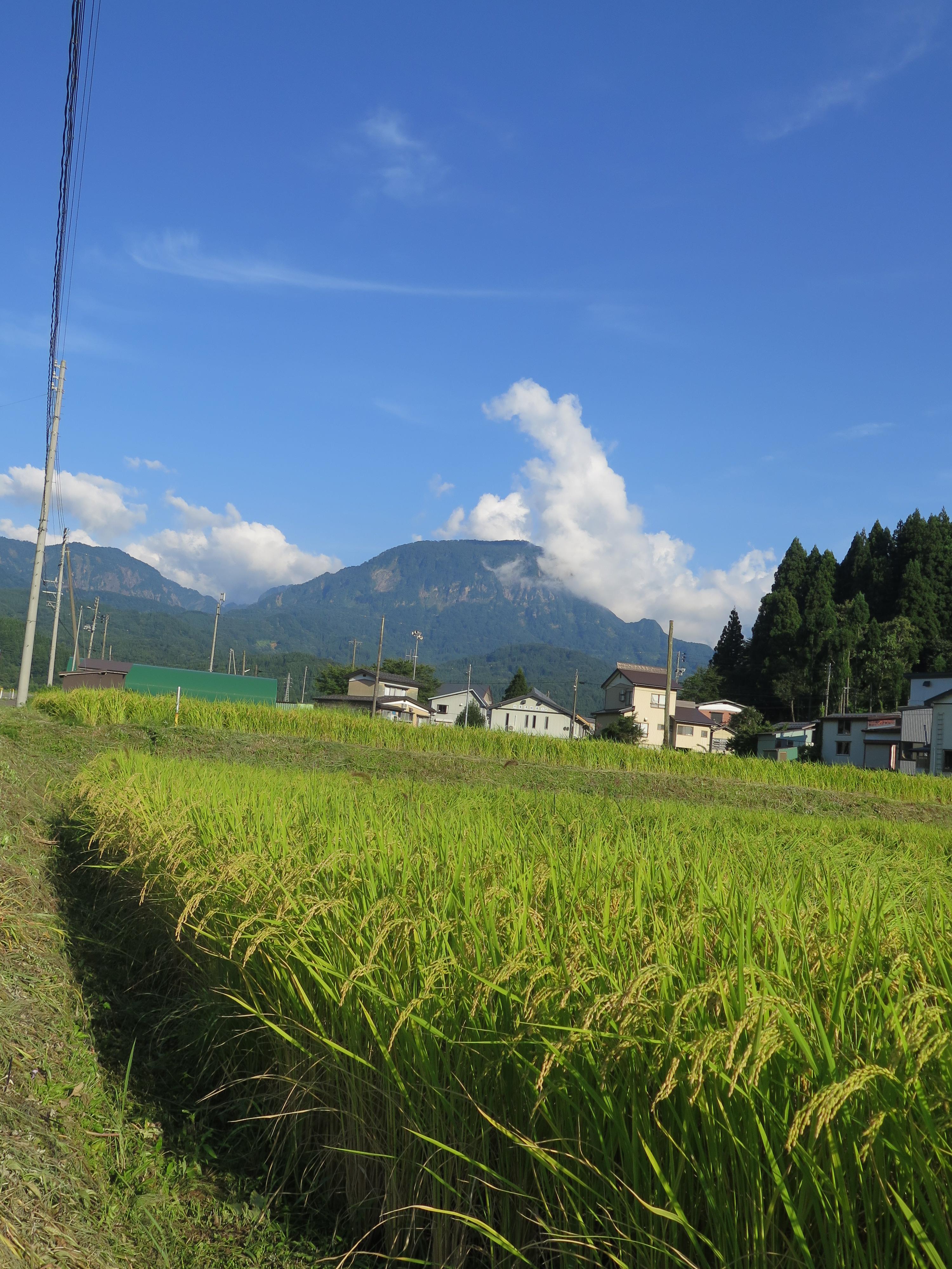 『田舎移住』が確信に変わったのは、うつ病と『もうひとつのふるさと・新潟県』の存在