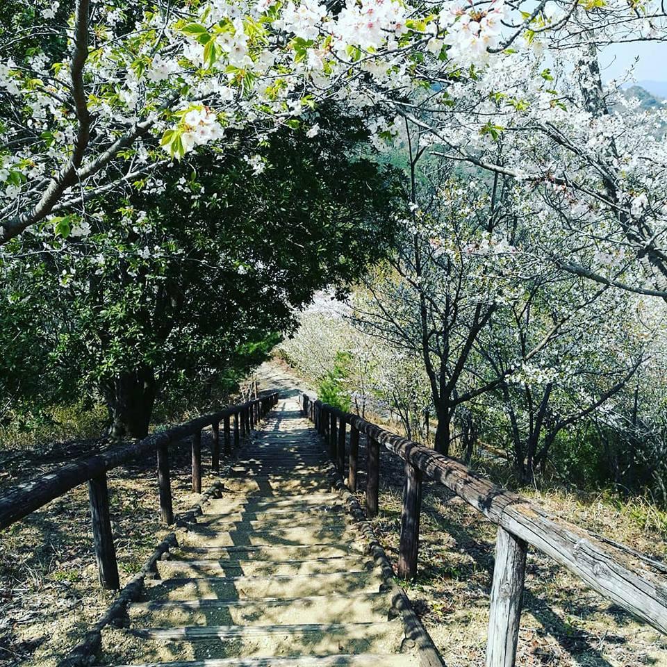 長い階段を上ってきました。桜のトンネルになっているので、癒されます